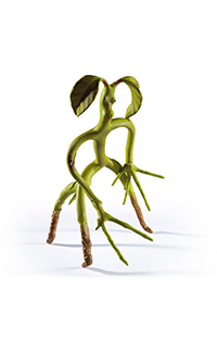 Fantastic Beasts: The Crimes of Grindelwald™ Bendable Bowtruckle